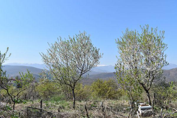 kozle-mala-tvrdina-na-nacionalniot-biodiverzitet-8A7608C47-B281-6B50-170F-ACCAD930FD75.jpg
