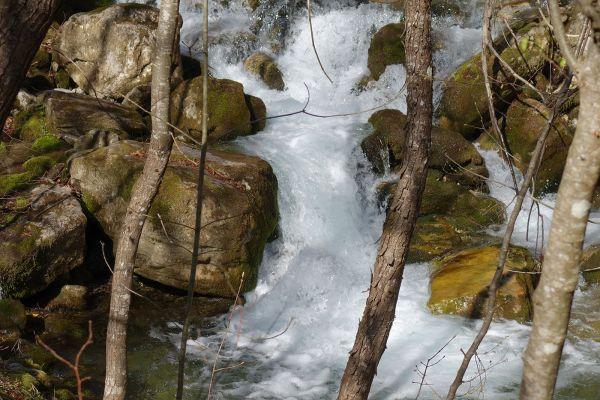 prirodnoto-bogatstvo-na-selo-zirovnica-tairovska-reka-158B19B6FC-D5F9-992A-AF53-31CAD36D36B3.jpg