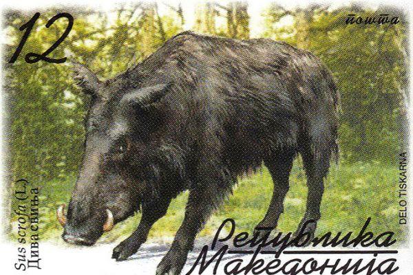 makedonskata-priroda-niz-postenskite-marki-53C634980-778C-1B4E-44C3-0E98B8EF797E.jpg