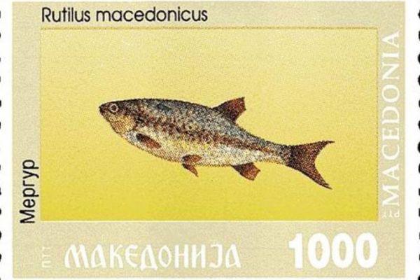 makedonskata-priroda-niz-postenskite-marki-182E4E76E8-E1E2-A0B0-43F1-4FE78DE26E55.jpg